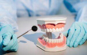 Dentist showing model teeth